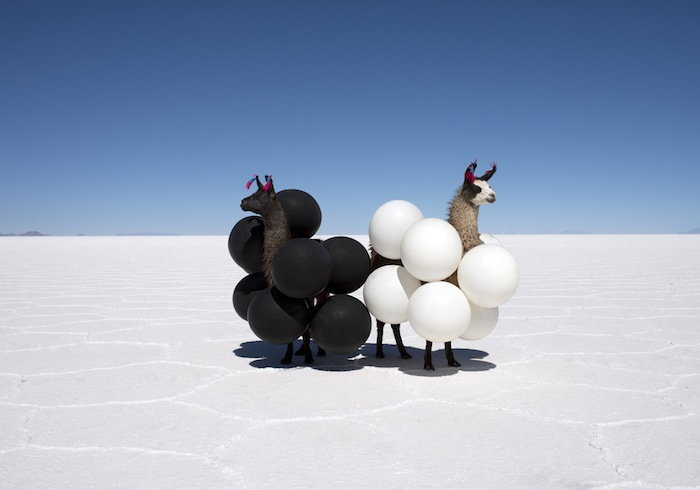llamas-black-and-white-balloons