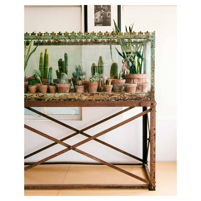 My favorite thing in #TheNewBohoBook might be this cactus situation…